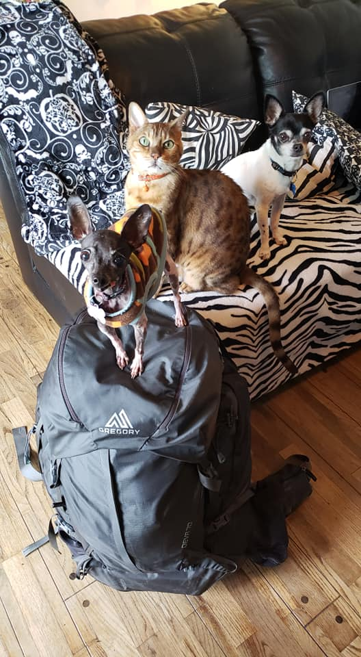 animals with bag